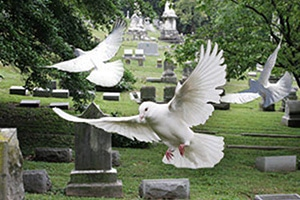 Funeral Dove Releases