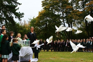 white doves for schools and other events Dove Releases