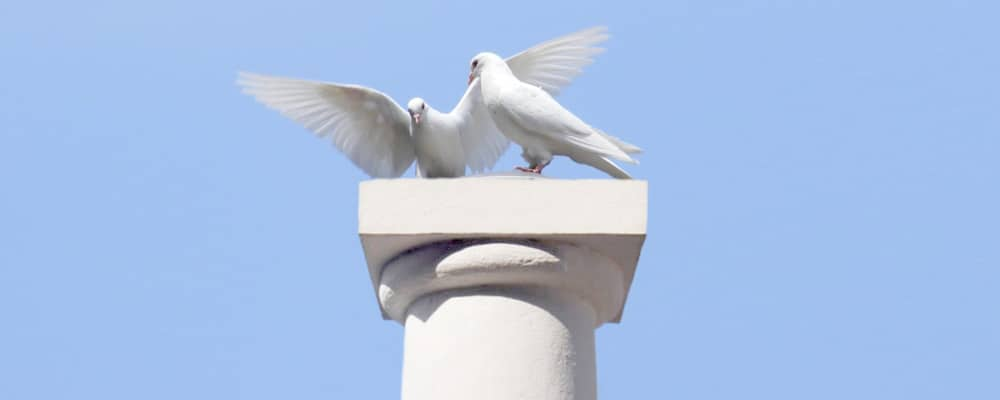 Doves for Funerals